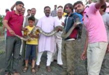 python, snake bite, india, selfie, fail
