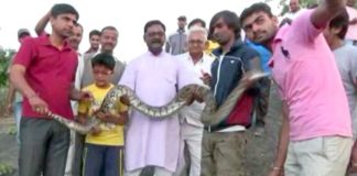 python, snake bite, india, selfie, fail